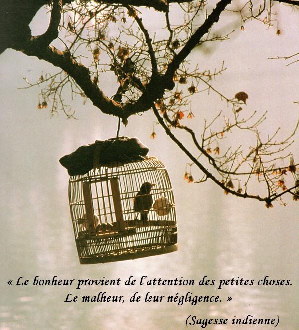 Extrêmement Citations en images : Le bonheur - Le monde de la philo et de la  OU44